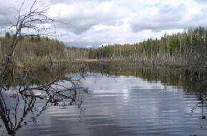 осенние реки для ловли щуки на спиннинг