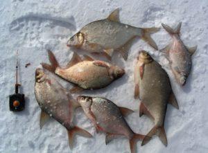 Снасти для зимней рыбалки для леща