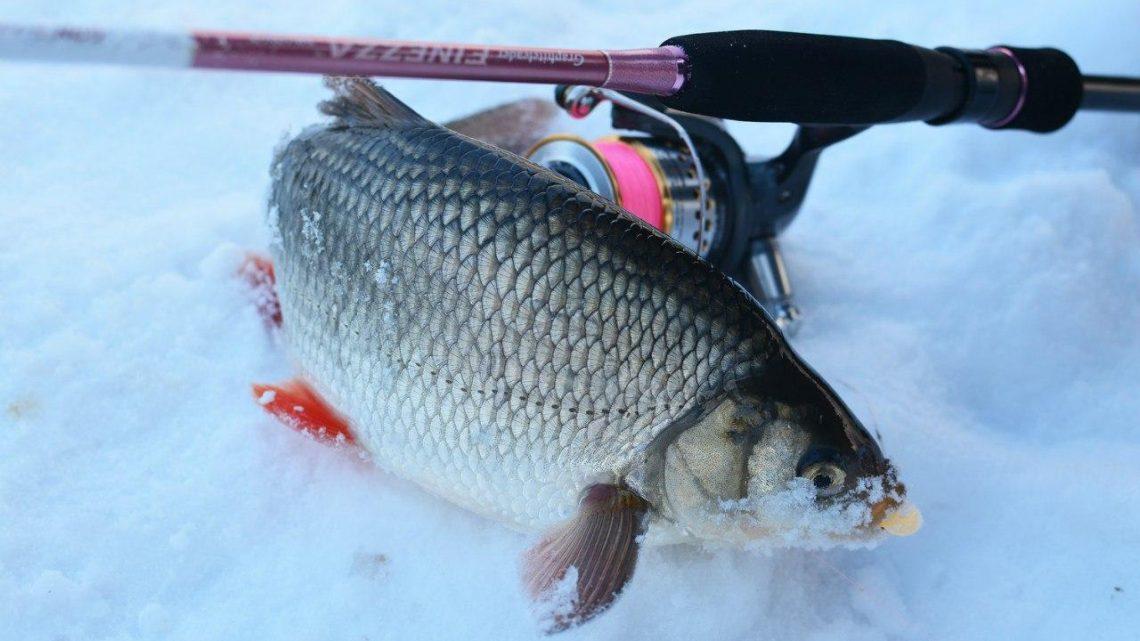 Где искать язя при рыбалке зимой со льда