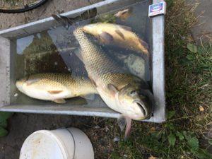 Рыбалка в Перлевке Воронеж
