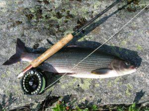 Рыбалка на Хариуса нахлыстом