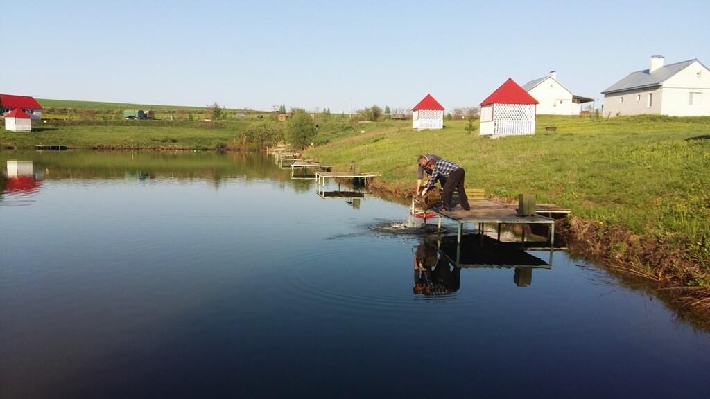 Чистые пруды в селе Гремячье Хохольского района Воронежской области
